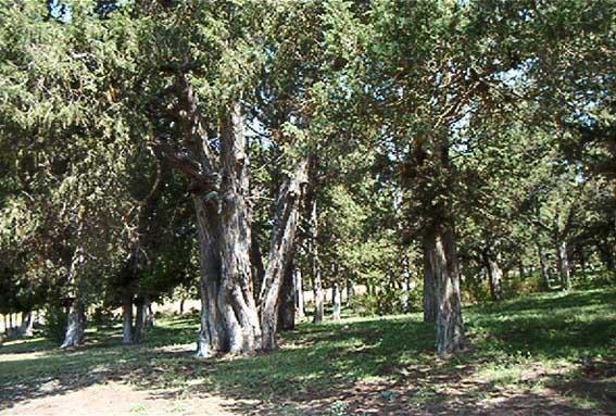 Sabinar de Calatañazor y la Fuentona