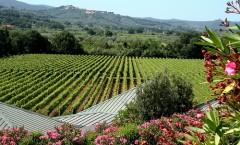 Cantine Aperte: déjate seducir por los vinos de la Toscana